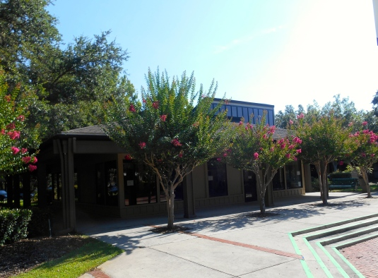 summer crape myrtles at the shopping center by the gym